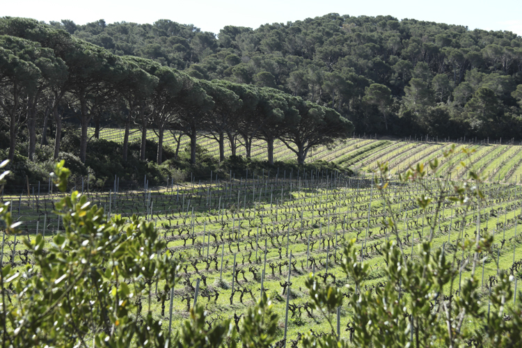 Porquerolles vineyards