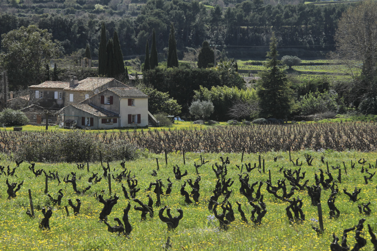 Bandol vineyards