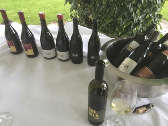 slovenia wine-43