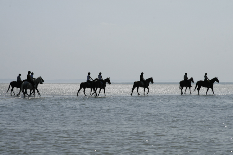 Horseriding on the beach of the bay of the Somme